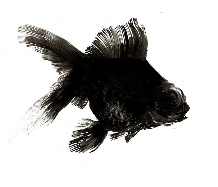 Black And White Goldfish