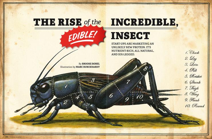 Mmm, Crickets